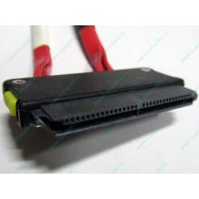 SATA-кабель для корзины HDD HP 451782-001 459190-001 для HP ML310 G5 (Крым)